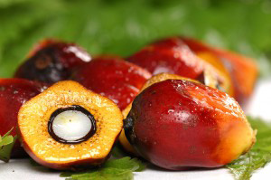 Palm oil for web site